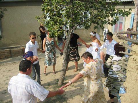 danza intorno all'albero del cortile